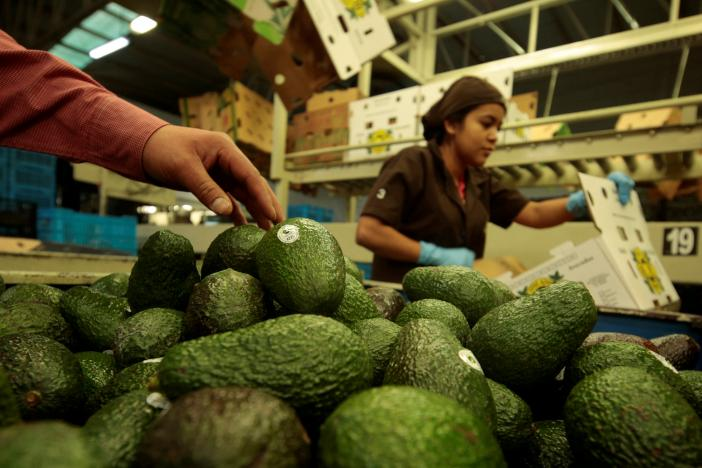 In Avocado Country, Mexicans not Afraid of Trump Tariff Threats