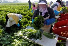 Farm Sector Looks to Automate as President Trump Targets Immigrants