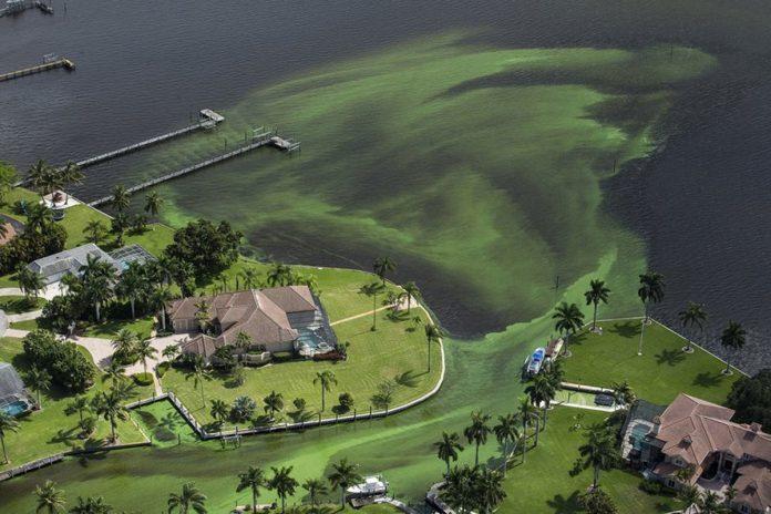 Toxic Algae, a Severe Nationwide Threat
