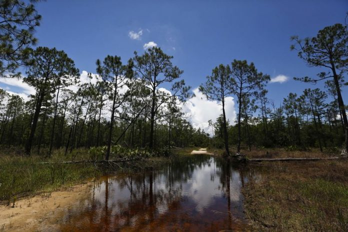 Trump's Move to Redefine Water Rule Threatens Florida's Wetlands Banks