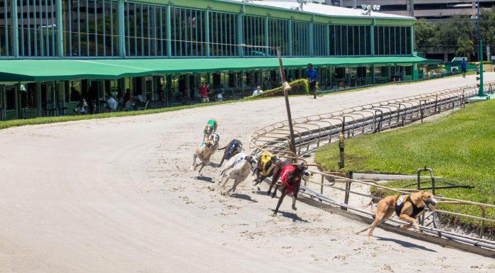 Florida Votes to Ban Greyhound Racing by 2021, Signaling Possible End of the Sport in US