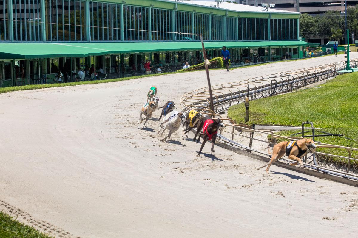 Florida Votes To Ban Greyhound Racing By 2021 Florida