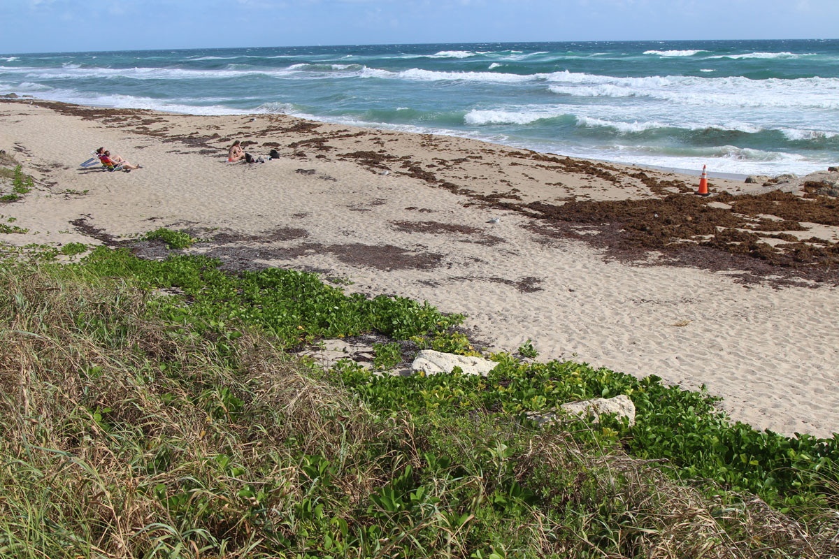 Beach in the Town of Palm Beach Needs a Clean-up