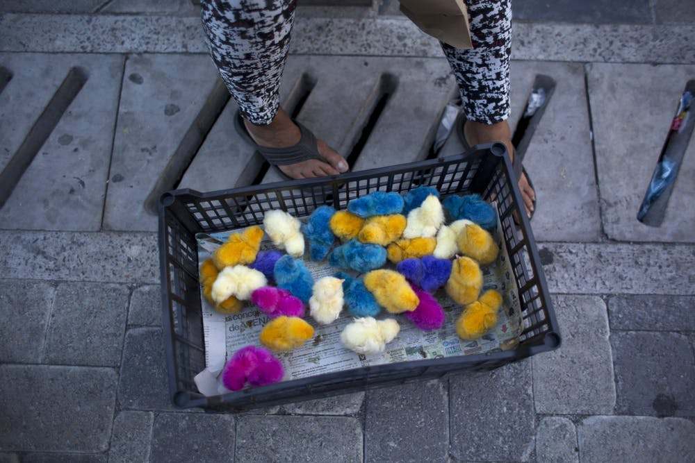 A woman sells live baby chicks in central San Salvador, El Salvador. Nearly 1 in 3 Salvadorans lives in poverty
