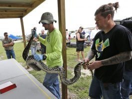 Doubling Resources to Remove the Invasive Pythons in the Everglades
