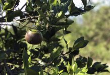 Southern Gardens Citrus Ends Processing at Plant in Southwest Florida