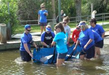 SeaWorld Releases Rescued Manatee after Treatment of an Injury